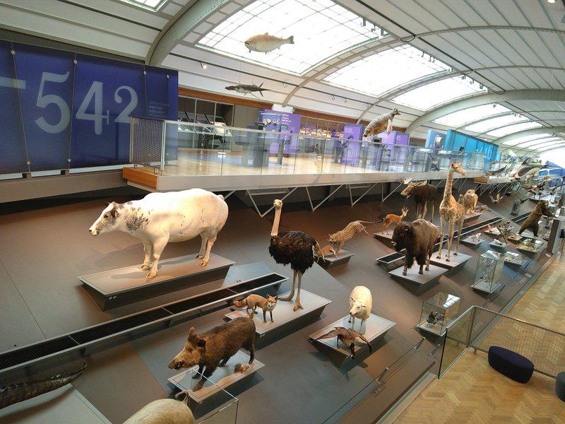 Geen storytelling zonder verandering: Galerij van de Evolutie.