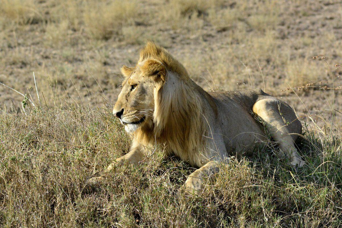 Innovatie en storytelling: hoe Richard de leeuwen verjoeg